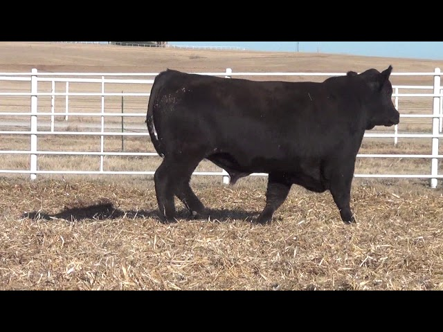 Express Ranches Lot 153