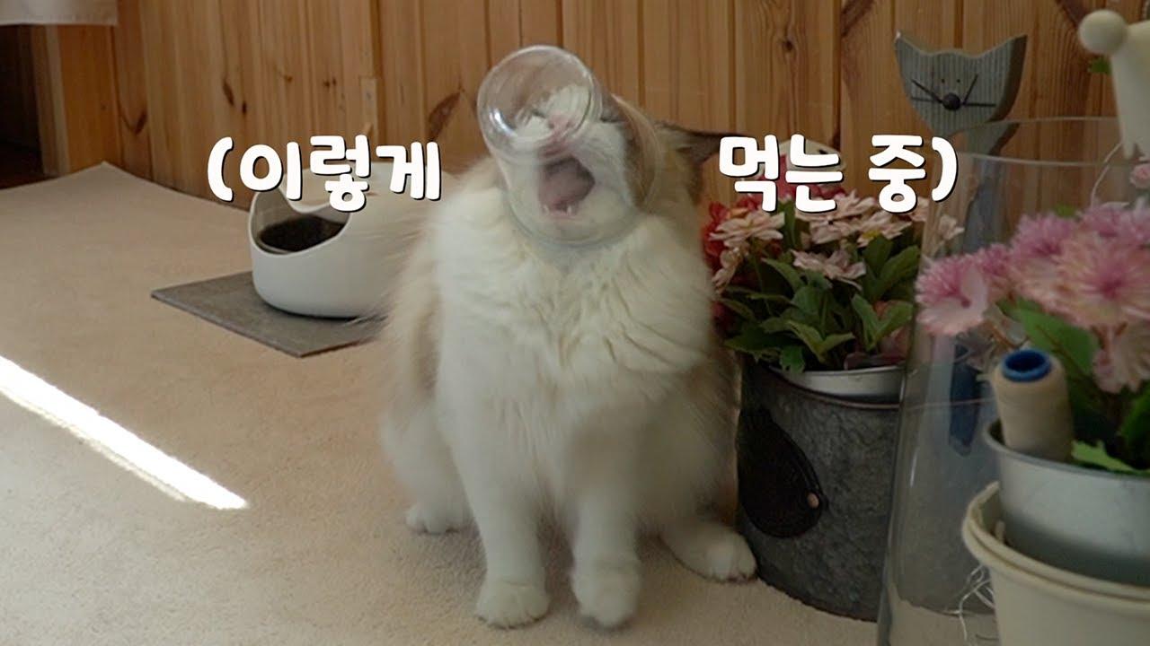 먹이를 컵에 주었을 때 고양이들의 상반된 반응ㅋㅋㅋ
