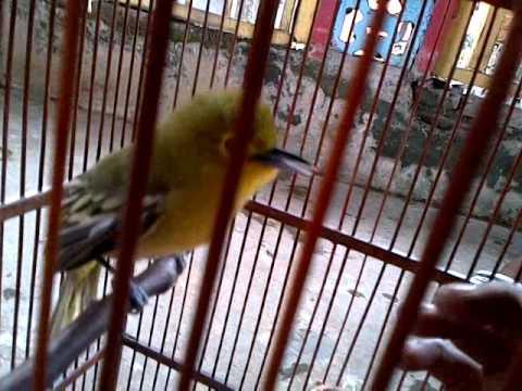 cipeuw gacor dahsat1