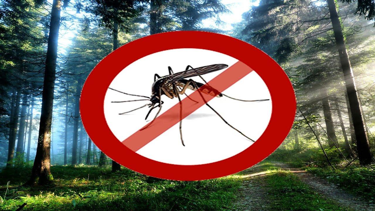чем спасаться от комаров дома маникюр можно показать