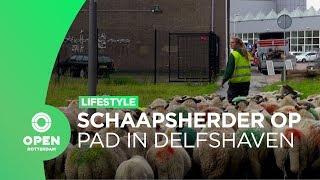 Met schaapsherder Aimee door Delfshaven | Lifestyle