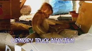 Poor orphan baby monkey Axel maybe got urinary truck infection cuz Axel still do  like this