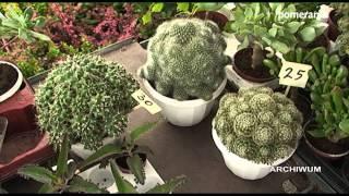 18-19 Maja na Wałach Chrobrego odbędą się prestiżowe targi ogrodnicze