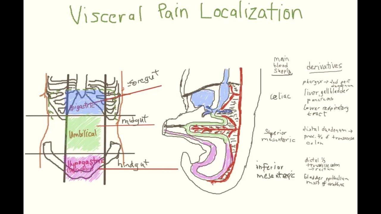 pediatric acute abdominal pain part 1 of 2 [ 1280 x 720 Pixel ]