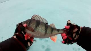 Зимняя рыбалка оз. Кубенское 25.12.16 | Окунь, Плотва, Ерш)