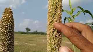 दाद और बवासीर से छुटकारा पाने वाला पौधा