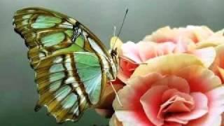 MUSICA CLASSICA - BRAHMS - POCO SOSTENUTO - VIVACE (HUNGARIAN DANCES)