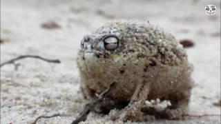 Лютая лягушка застряла в Укупнике