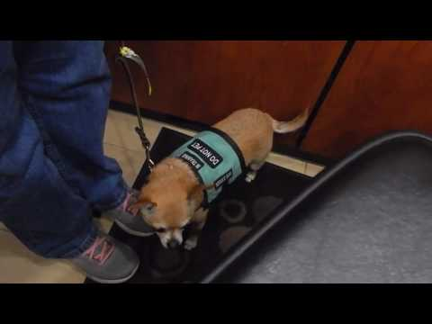 Psychiatric Service Dog Partners' Public Access Test From 2017 Convention