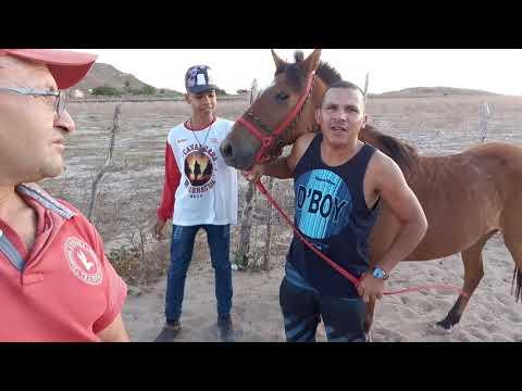 Corrida  De Cavalo No Bairro Felicidade Carnaubal Ceará.
