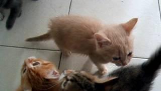 Noisy kittens waiting for dinner! thumbnail