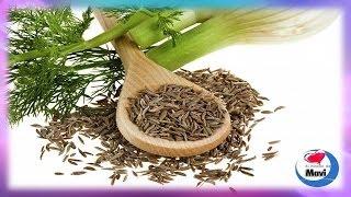 Hinojo Propiedades Curativas, beneficios y usos medicinales del hinojo