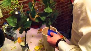 Проводим Эксперимент на розах. Компания
