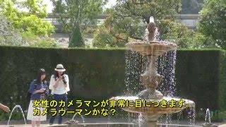 4K ・松江イングリッシュガーデン・ローズフェスティバル(Rose Festival :Matsue English  Garden)バラ園・英国式庭園・荘厳・美女・超高画質