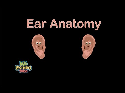 Ear song for kidsear anatomy for childrenear song youtube ear song for kidsear anatomy for childrenear song ccuart Images