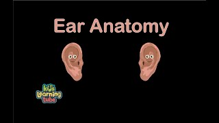 Ear Song for Kids/Ear Anatomy for Children/Ear Song