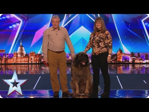 See huge dog Hagrids sausage slinging World Record attempt | Britains Got More Talent 2017
