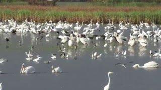 Bear Island WMA water draw down 3,  ACE Basin, South Carolina