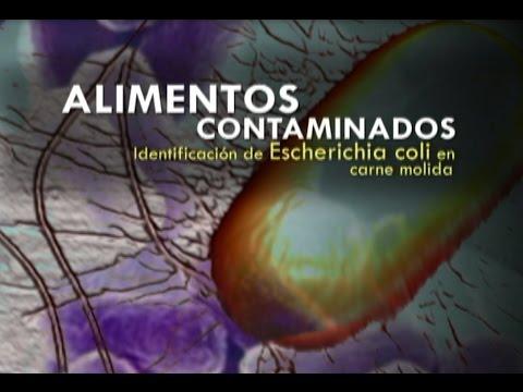 Alimentos contaminados, identificación de Escherichia coli en carne molida