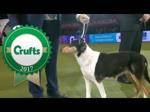 Vulnerable Breeds Competition | Crufts 2017