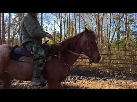 Timberlyn Farms Western Lessons - Eddie's Riding Lesson