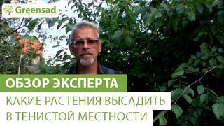 Какие растения высадить в тенистой местности(В этом видео наш эксперт расскажет Вам о растениях которые хорошо растут в тени. Большой выбор теневынослив..., 2014-08-11T06:15:21.000Z)