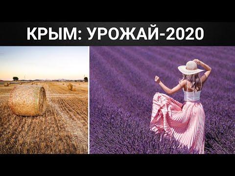 Засуха, заморозки, вымирание пчёл. Каким будет урожай Крыма в 2020 году?