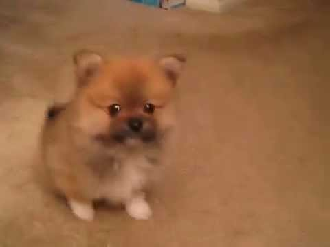 Funny And Cute Dog Wiping His Bum Youtube