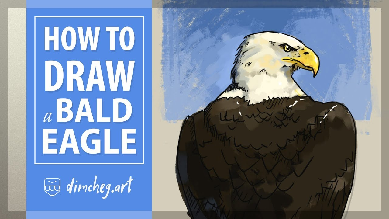 How to draw a bald eagle draw with dimcheg