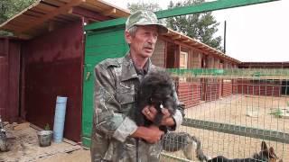 Приют Сергея Фокина для бездомных животных