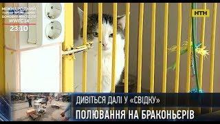 У Києві можна безкоштовно стерилізувати безпритульних котів