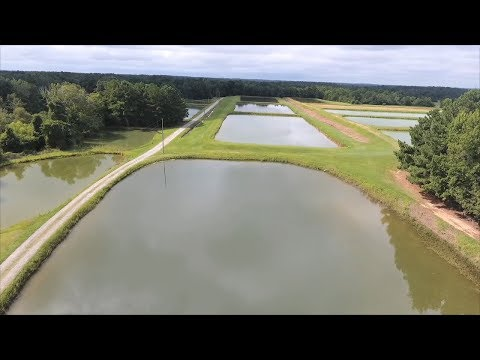 Hawkinsville, Georgia Farm Helps Satisfy Our Taste For Catfish