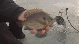 "Minnesota Ice Fishing for Bluegills   Bonus 19"" Largemouth Bass!"