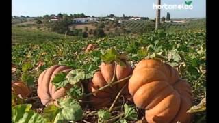 Hortomelao, Produtos Hortícolas e Frutos