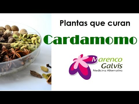 Plantas que curan: Cardamomo, Propiedades y Beneficios /Medicina Alternativa
