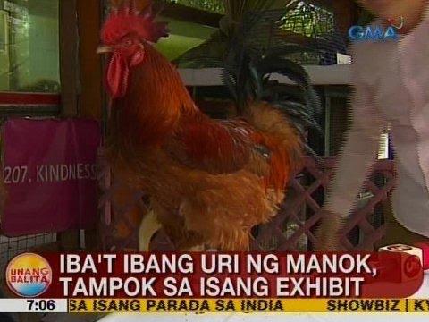 Ub Iba T Ibang Uri Ng Manok Tampok Sa Isang Exhibit