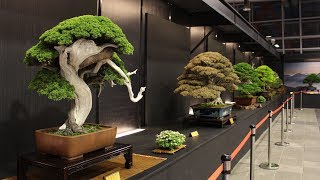Hwa Fong Bonsai exhibition 2017