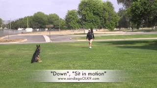 Vacaville/sacramento Dog Trainers; Gsd Suzuka Before And After