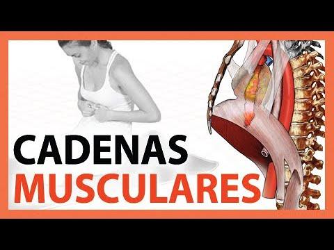 cadenas-musculares---entrevista-a-fernando-jiménez---🛑-muy-revelador!-yoga-terapéutico--