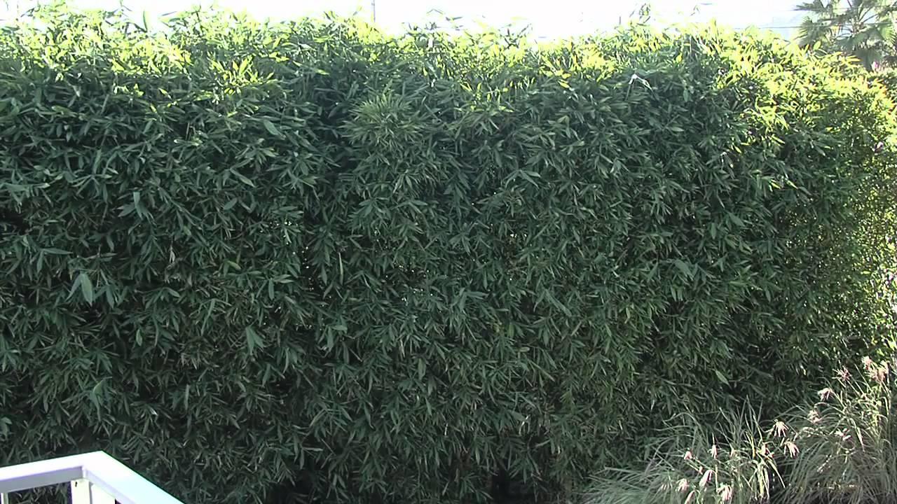 Backyard Privacy Ideas - Bamboo - YouTube