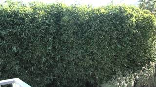 Backyard Privacy Ideas - Bamboo