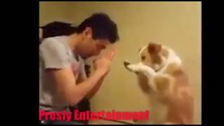 Download Video Anjing Pintar Lucu Campur Terharu, Hewan Saja Berdoa Sebelum Makan Dan Tidur MP3 3GP MP4