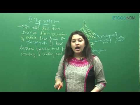 NEET I Biology I Morphology of flowering plants I Shivani Bhargava(SB) Mam from ETOOSINDIA.COM