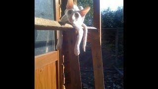 Смешнее кошек прыгают только котята :)