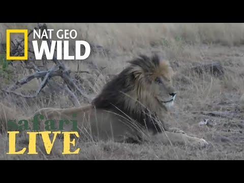 Safari Live - Day 3 | Nat Geo WILD