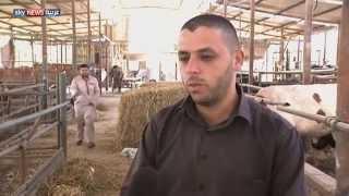 غزة.. ارتفاع أسعار الأضاحي