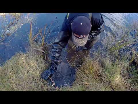 Постановка капкана на бобра (Сastor Mount + Beaver Creek )