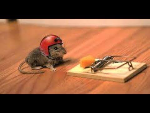 PERLU DIKETAHUI !! 16 Cara Mengusir Tikus Di Rumah Secara Alami