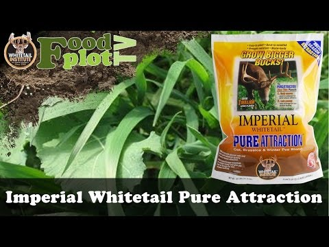 Whitetail Institute Pure Attraction Food Plot