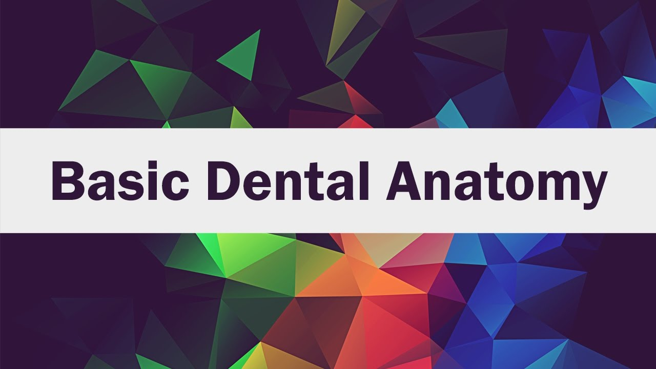 Basic Dental Anatomy for First-Year Students - YouTube